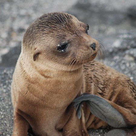 Photo of Galapagos Islands, Ecuador