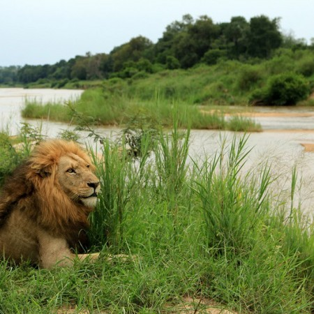 Photo of Sabi Sand Reserve South Africa